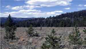 Pine_Encroachment